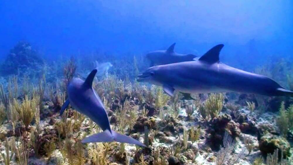 Ramon's Village Resort - Diving